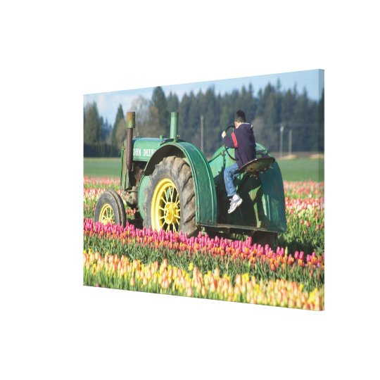 USA, Oregon, Woodburn, Wooden Shoe Tulip Canvas Print