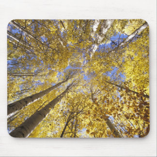 USA, Pacific Northwest. Aspen trees in autumn Mouse Pad
