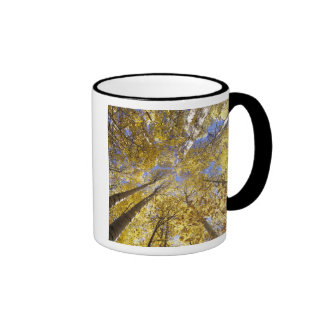 USA, Pacific Northwest. Aspen trees in autumn Coffee Mugs
