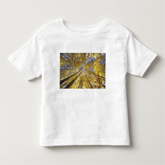 USA, Pacific Northwest. Aspen trees in autumn Toddler T-shirt