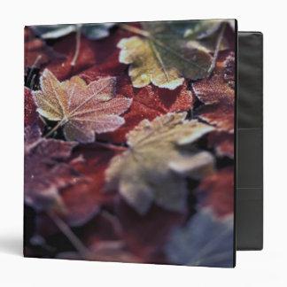 USA, Pacific Northwest. Japanese maple leaves Binder
