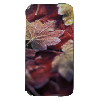 USA, Pacific Northwest. Japanese maple leaves iPhone 6/6s Wallet Case