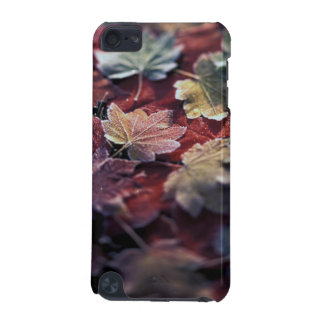 USA, Pacific Northwest. Japanese maple leaves iPod Touch 5G Cover