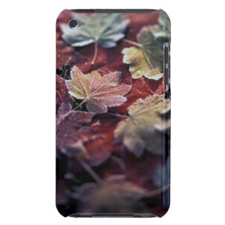 USA, Pacific Northwest. Japanese maple leaves iPod Touch Case-Mate Case