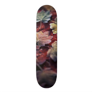 USA, Pacific Northwest. Japanese maple leaves Skateboard Deck