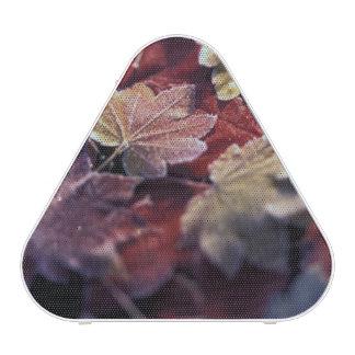 USA, Pacific Northwest. Japanese maple leaves Speaker