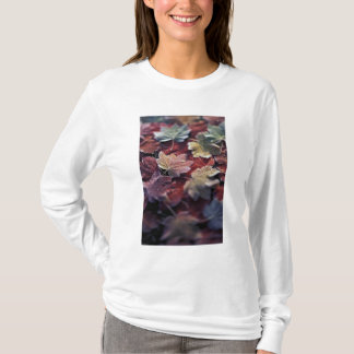 USA, Pacific Northwest. Japanese maple leaves T-Shirt