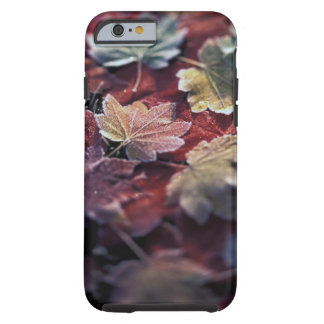 USA, Pacific Northwest. Japanese maple leaves Tough iPhone 6 Case
