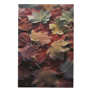 USA, Pacific Northwest. Japanese maple leaves Wood Wall Decor