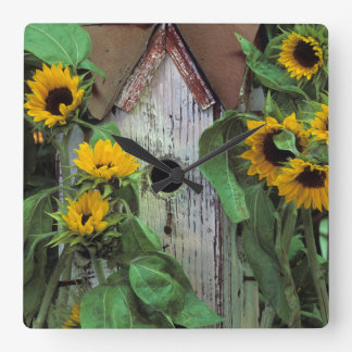 USA, Pennsylvania. Birdhouse and garden Square Wall Clock
