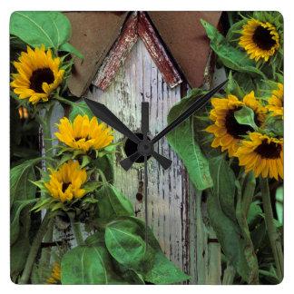 USA, Pennsylvania. Birdhouse and garden Square Wall Clock