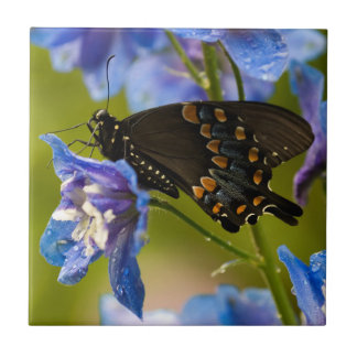 USA, Pennsylvania. Close-up of butterfly Ceramic Tile