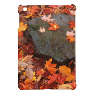 USA, Pennsylvania. Close-Up Of Forest Floor Case For The iPad Mini