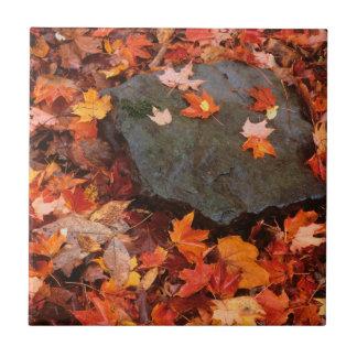 USA, Pennsylvania. Close-Up Of Forest Floor Ceramic Tile