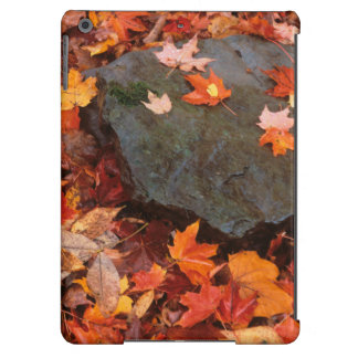 USA, Pennsylvania. Close-Up Of Forest Floor Cover For iPad Air