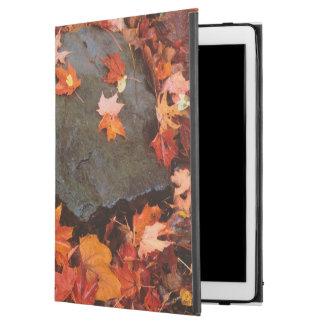 USA, Pennsylvania. Close-Up Of Forest Floor iPad Pro Case