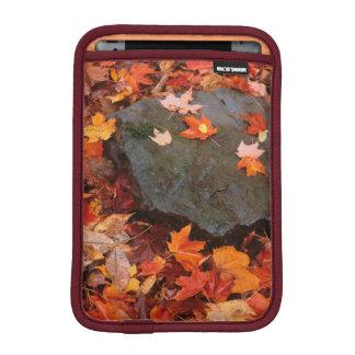 USA, Pennsylvania. Close-Up Of Forest Floor iPad Mini Sleeves