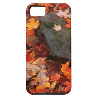 USA, Pennsylvania. Close-Up Of Forest Floor iPhone SE/5/5s Case