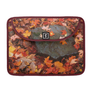 USA, Pennsylvania. Close-Up Of Forest Floor Sleeves For MacBooks