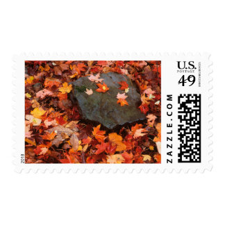 USA, Pennsylvania. Close-Up Of Forest Floor Postage