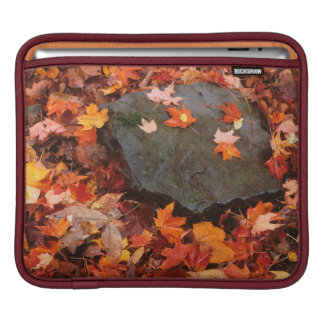 USA, Pennsylvania. Close-Up Of Forest Floor Sleeve For iPads