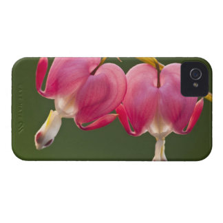 USA, Pennsylvania. Close-up of two bleeding Case-Mate iPhone 4 Cases