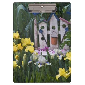 USA, Pennsylvania. Garden irises grow around Clipboard