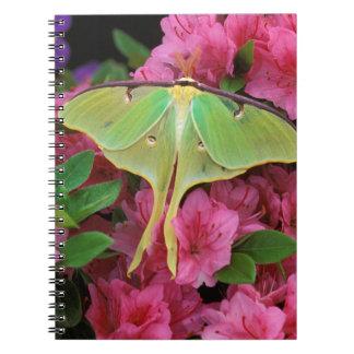 USA, Pennsylvania. Luna moth on pink clematis Spiral Notebook