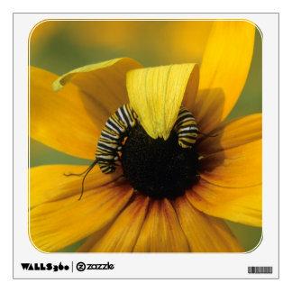 USA, Pennsylvania. Monarch caterpillar on daisy Wall Decal