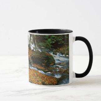 USA, Pennsylvania, Ricketts Glen State Park Mug