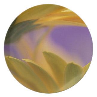 USA, Pennsylvania. Yellow Gerbera Daisies, close Party Plate