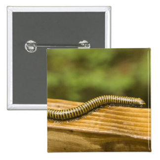 USA Puerto Rico Ponce Millipede Buttons