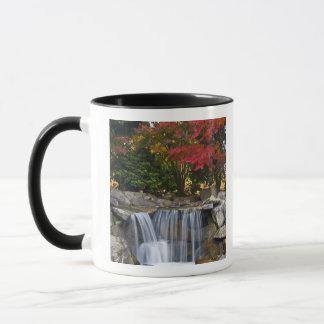 USA, Redmond, Washington. Fall color in a park. Mug