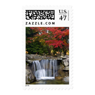 USA, Redmond, Washington. Fall color in a park. Postage