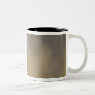 USA, Seattle, Washington. Male Mallard blasts 2 Two-Tone Coffee Mug