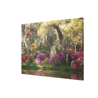 USA, South Carolina, Charleston. Cypress Trees 2 Canvas Print