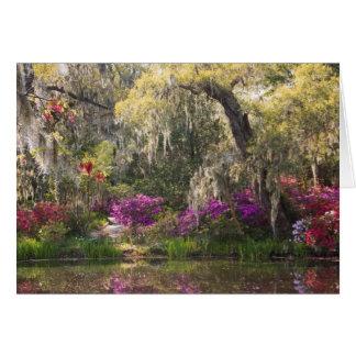USA, South Carolina, Charleston. Cypress Trees 2 Cards