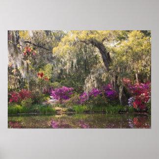 USA, South Carolina, Charleston. Cypress Trees 2 Print