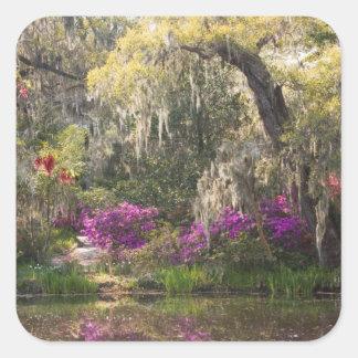 USA, South Carolina, Charleston. Cypress Trees 2 Square Sticker