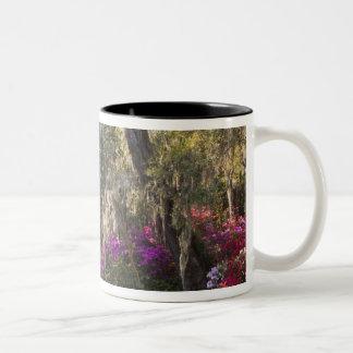 USA, South Carolina, Charleston. Cypress Trees 2 Two-Tone Coffee Mug
