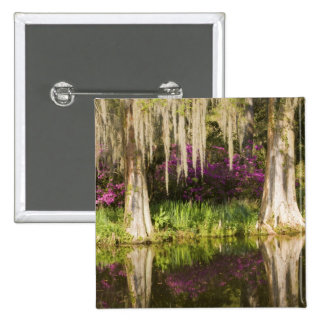 USA, South Carolina, Charleston. Cypress Trees Pin