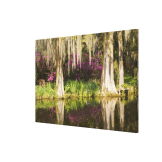 USA, South Carolina, Charleston. Cypress Trees Canvas Print