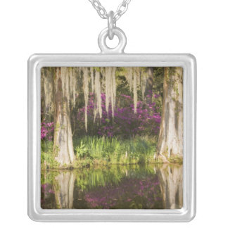 USA, South Carolina, Charleston. Cypress Trees Silver Plated Necklace