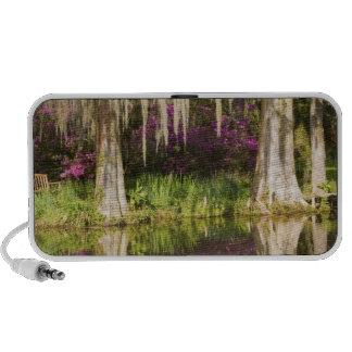 USA, South Carolina, Charleston. Cypress Trees Travelling Speaker