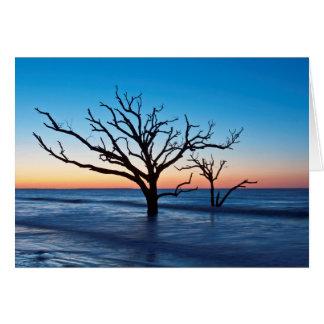 USA, South Carolina, Edisto Island, Botany Bay Greeting Card