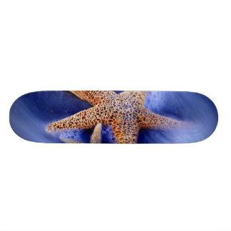 USA, South Carolina, Hilton Head Island. Two Skate Board Decks