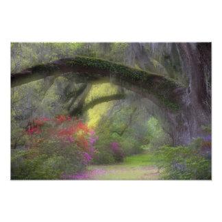 USA, South Carolina, Magnolia Gardens. Photo Print