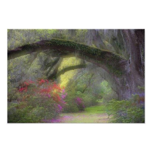 USA, South Carolina, Magnolia Gardens. Photographic Print