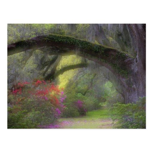 USA, South Carolina, Magnolia Gardens. Post Card