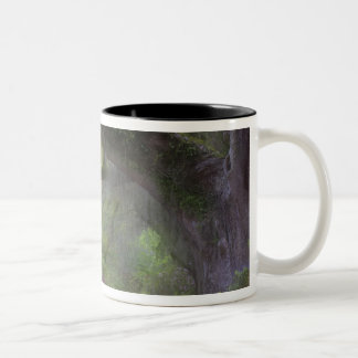 USA, South Carolina, Magnolia Gardens. Two-Tone Coffee Mug